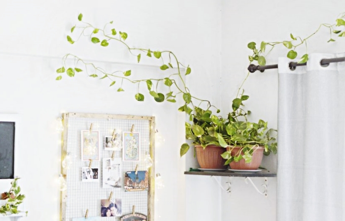 pothos plante appartement pot fleur terre cuite grillage photos guirlande lumineuse rideaux blancs