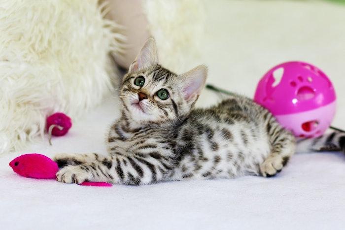 quoi installer dans un coin pour chat exemple de niche chat aux jouets stimulants, niche sous escalier pour chat
