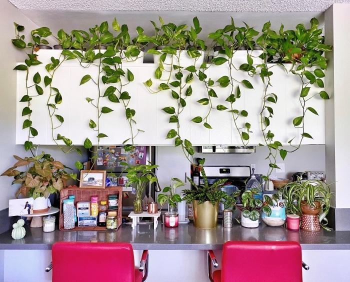 rangement cuisine pots de fleur plante d intérieur tombante plan de travail gris anthracite