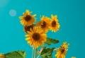 Produits et secrets pour une routine d'été tout en beauté