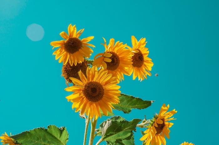 tournesol soleil été comment se maquiller beauté naturelle protection solaire