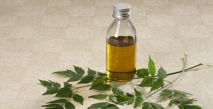 éliminer les pucerons avec des moyens et méthodes naturels remèdes maison contre les poux feuilles neem huile