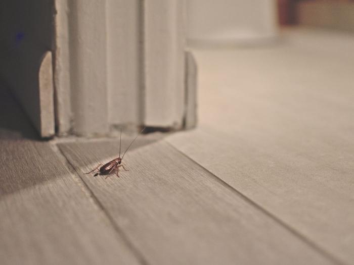 éloigner les cafards naturellement lutte contre invasion cafards maison couloir parquet