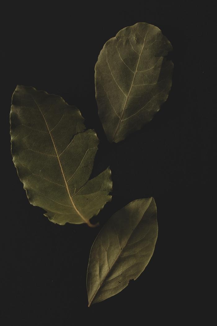 anti cafard maison feuilles de laurier contre insectes cuisine ingrédients lutte cafards