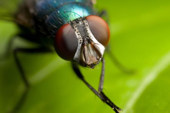 anti mouche efficace pour maison insecte sur une feuille verte