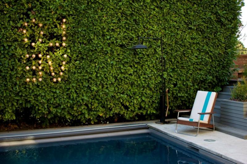 arbre autour piscine le jasmin étoile grimpant cache une piscine