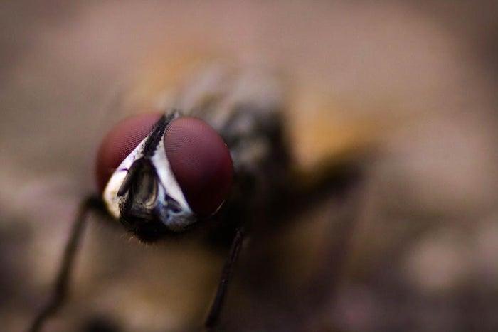 astuce contre les mouches sur fond dilué