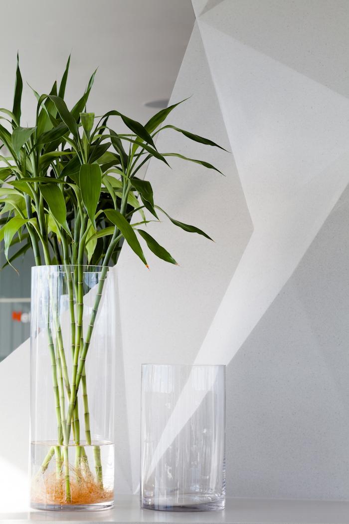bambou nain feuillage vert en contraste avec les murs blancs