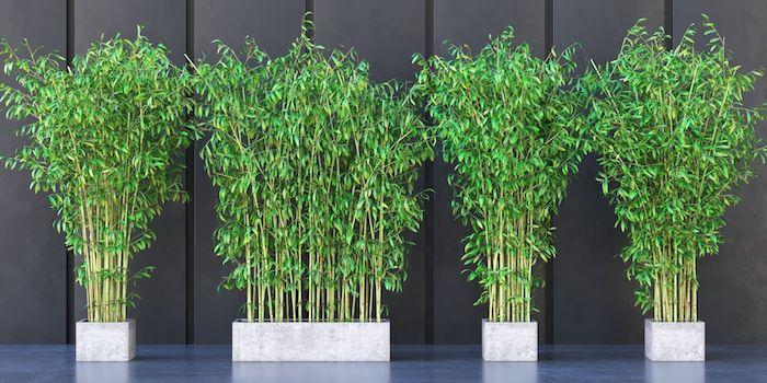 bambous nains en pots et en bacs en peirre mur gris anthracite
