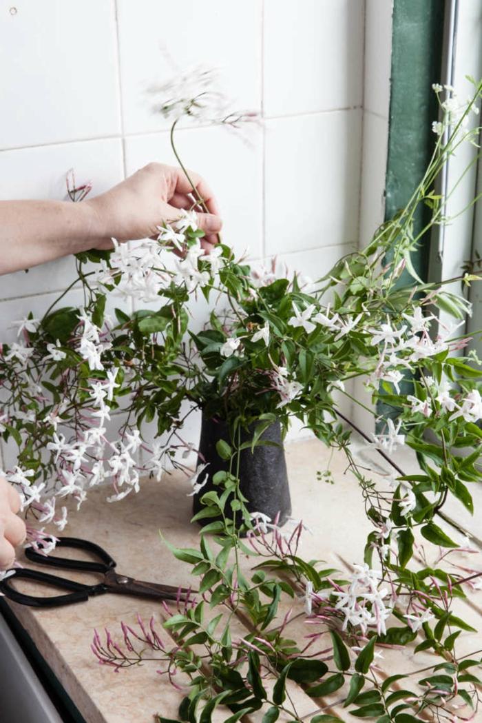 bouture jasmi étoilé le jasmin bouturé mis dans un bocal