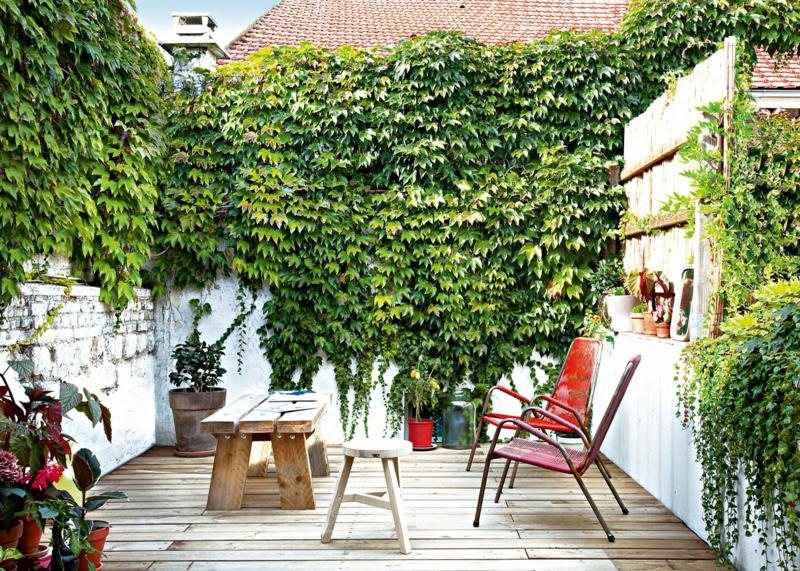brise vue resistant au vent fort la vigne vierge sur une terrasse