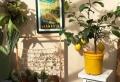 Le citronnier en pot – plantation, taille et entretien