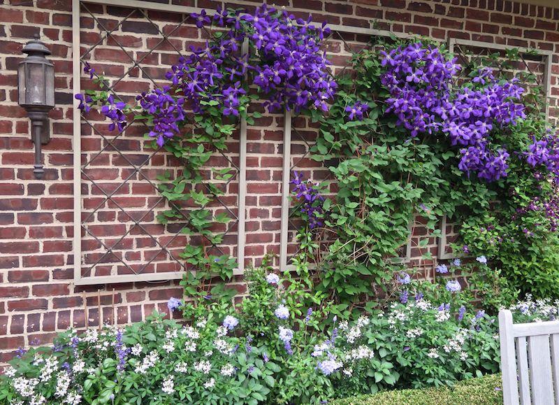 clématite dans la deco jardin plantes retombantes mur exterieur fleurie