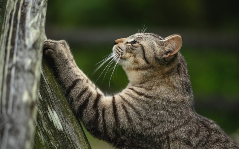 comment éloigner les chats un chat qui aiguise ses ongles sur un arbre