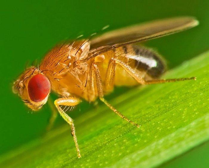 comment éliminer les moucherons à la maison moucheron sur une feuille verte