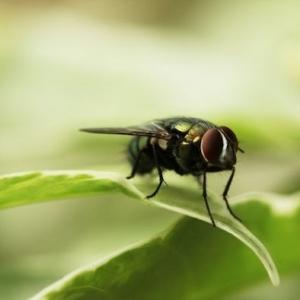 Nos conseils comment éloigner les mouches