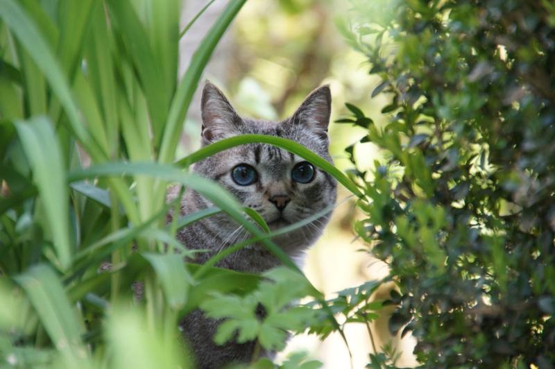 comment empecher les chats de venir dans mon jardin un chat dans le jardin