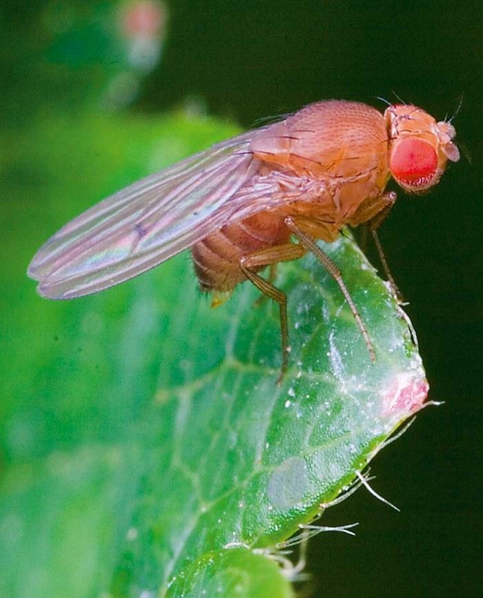 comment faire partir les moucherons de la maison moucheron sur feuille verte