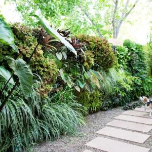 """10 idées """"vertes"""" pour habiller un mur extérieur avec des plantes"""