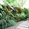 comment habiller un mur extérieur abimé de plantes vertes mur vegetal exterieur