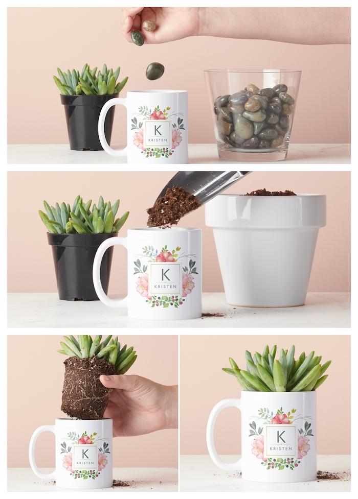comment planter une plante succulente avec galets et terreau plante verte