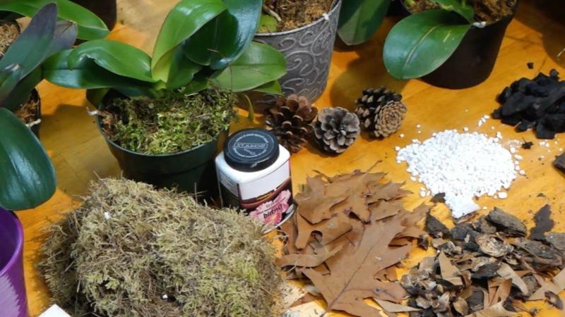 comment s occuper d une orchidée préparer le substrat des orchidées