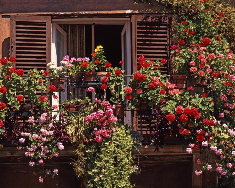 comment se cacher des voisins rapidement le beau rosier grimpant sur une terrasse