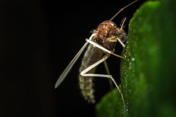comment se débarrasser des moucherons dans son appartement sans les tuer