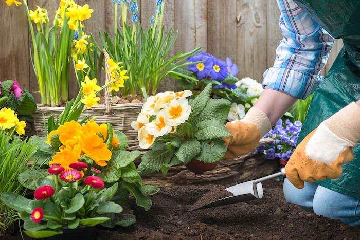 composition d un massif de plantes vivaces florifères plantation de fleurs