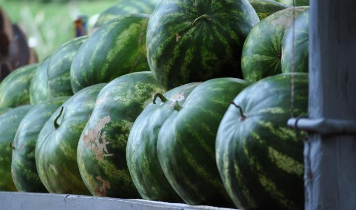 couleur pasteque verte tige mur fruit recolte choisir une pasteque écorce saine