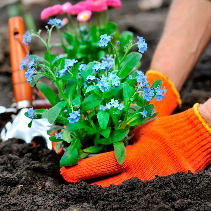créer un massif sans entretien planter des plantes à fleurs bleues
