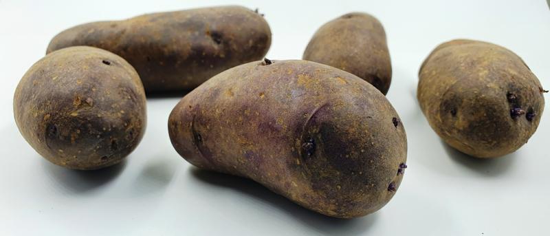cuire des pommes de terre au four pomme de terre bleue d'auvergne