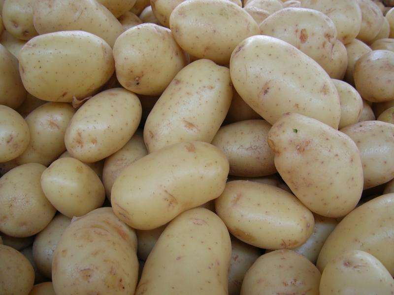 cuire des pommes de terre au four pomme de terre agata
