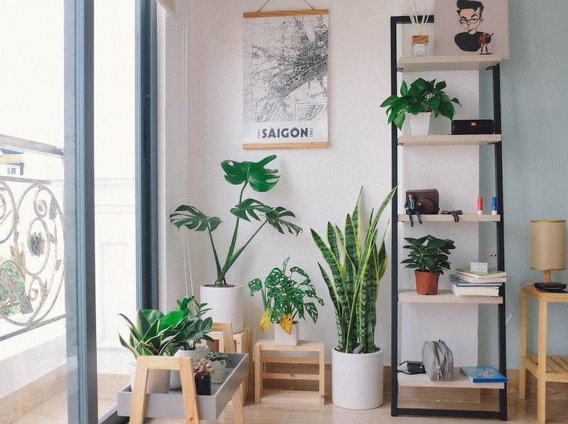 deco vegetal par soucoulents plante verte d interieur