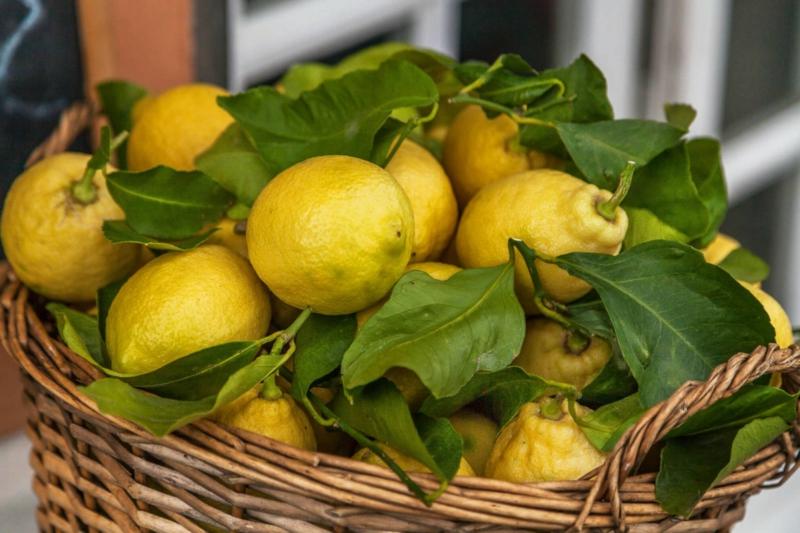 entretien citronnier des citrons dans un panier