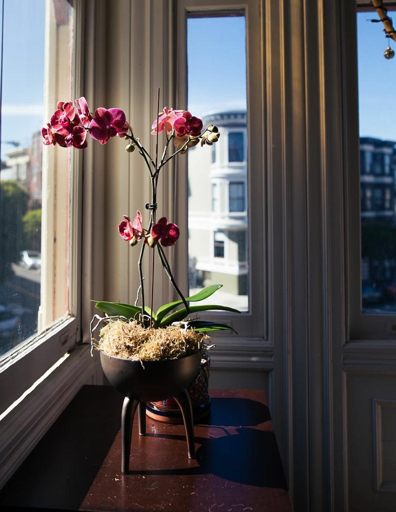 entretien des orchidees d interieur une orchidée rose près de la fenêtre