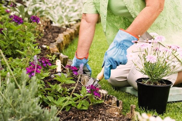 fleurs qui florissent toute l année exterieur plantation de fleurs bordure de bois