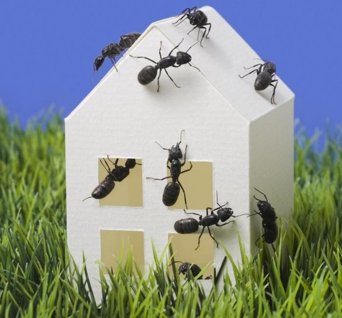 fourmis dans la maison méthodes pour faire fuire les fourmis dans intérieur produits répulsifs