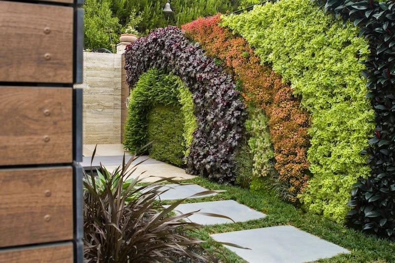 habiller un mur extérieur avec des plantes exemple de plantes dgrimpantes de genres variés