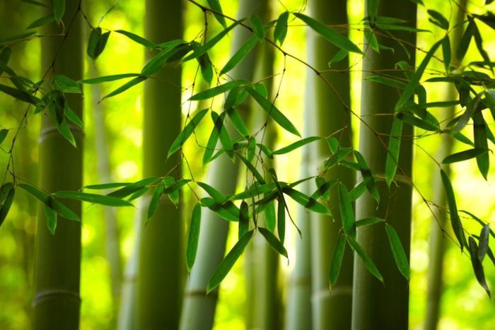 haie de bambou brise vue écran de verdure zen et rafraichissant