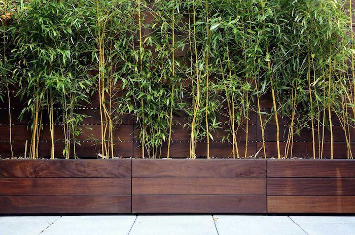 haie de bambou en bac en bois foncé contraste avec la verdure