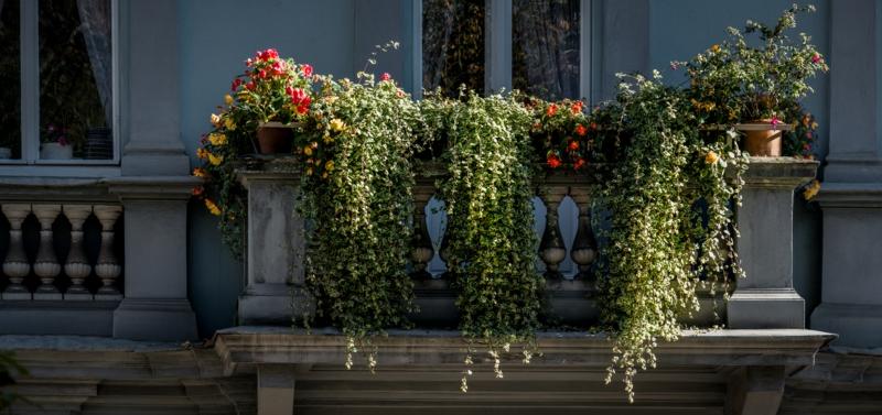 idee brise vue vegetal un jasmin étoillé grimpant sur la terrasse