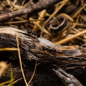 Comment se débarrasser des fourmis - 9 méthodes efficaces et naturelles