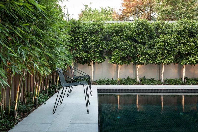 jardin avec piscine bambou comme une haie