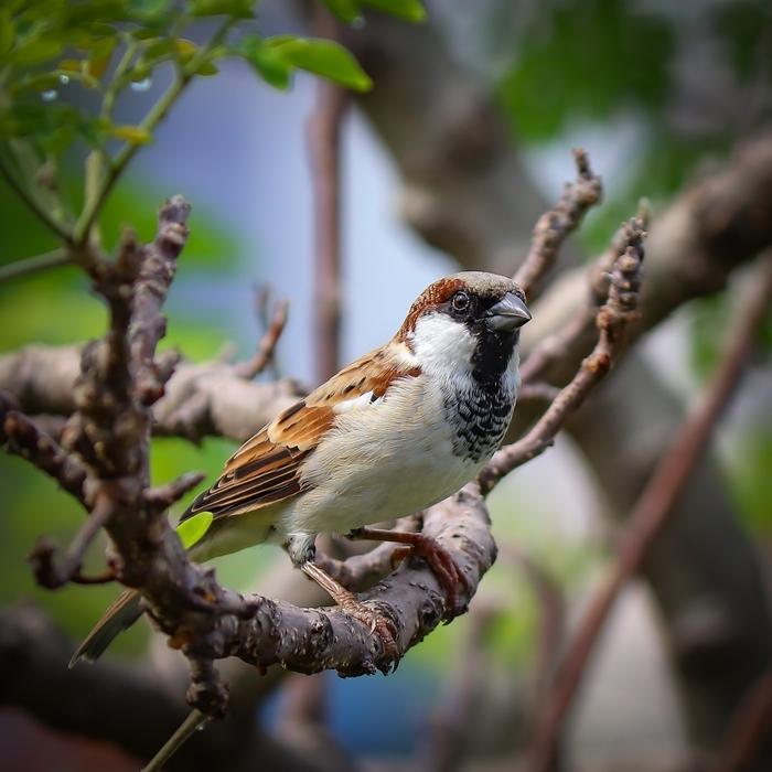 jardinage oiseaux arbres lutter contre les pucerons conseils et méthodes efficaces