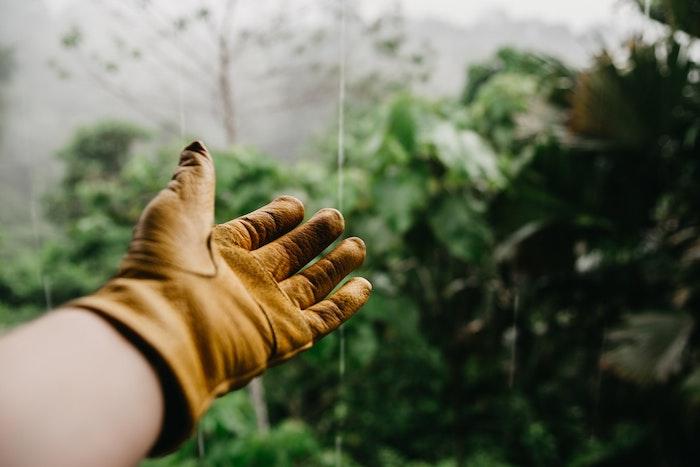 jardiner à domicile se faire aider par des jardiniers gant de jardinage plantes vertes