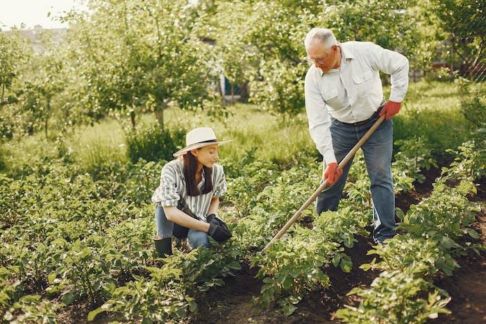 le jardinage partagé potager de légumes se faire aider pour cultiver la terre