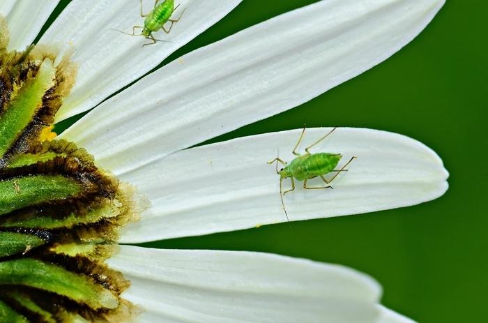 les meilleurs remèdes maison méthodes naturelles petits insectes conseils utiles pour jardin