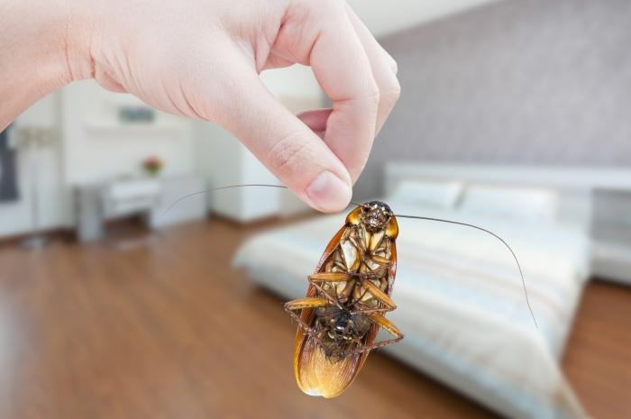 méthodes efficaces pour lutter contre cafards chasser insectes domicile repulsif naturel