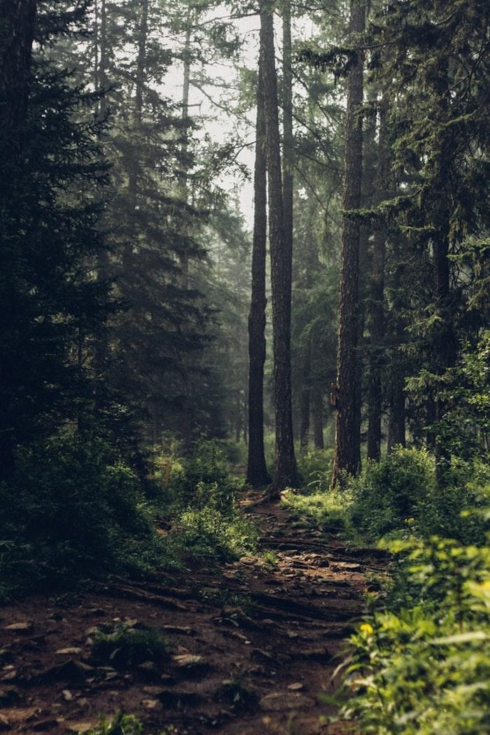 métier forestier équipement spécial de travail sentier dans la forêt